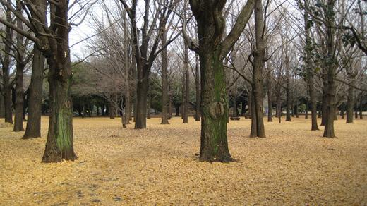 park of Tokyo